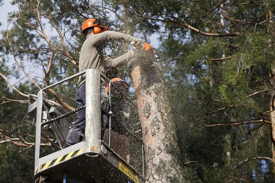Tree maintenance works