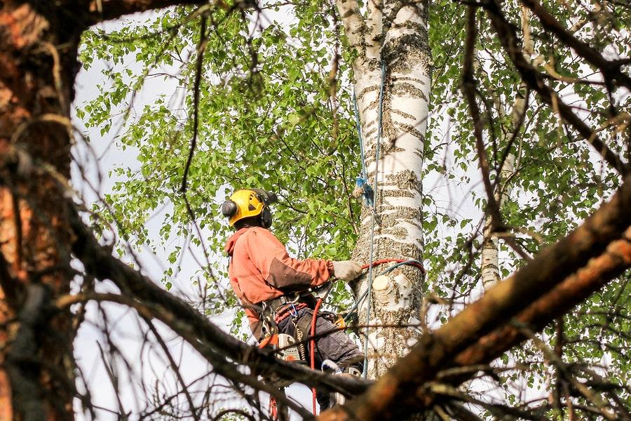 Worker tree pruning