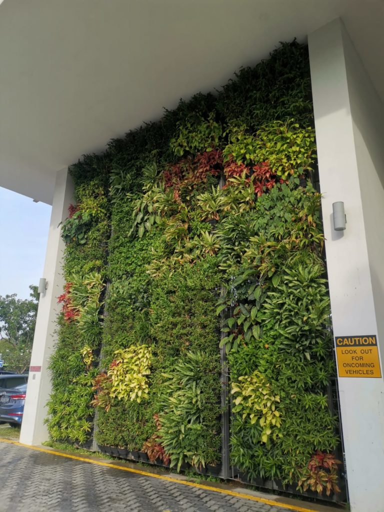 Green wall horticulture